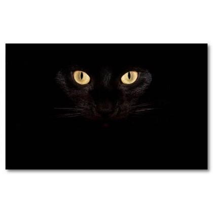 Αφίσα (γάτα, μαύρο, μάτια)